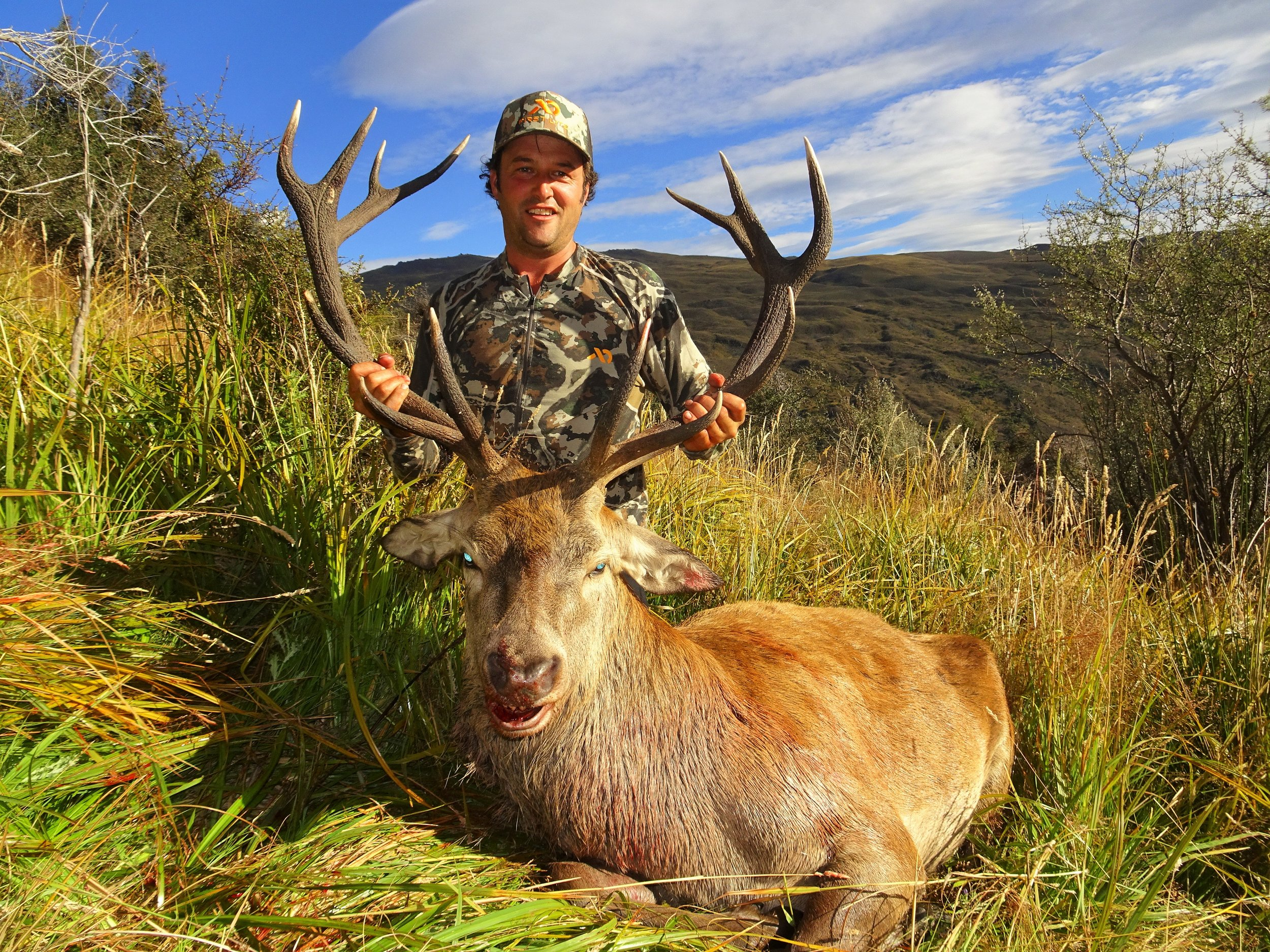 great otago red stag