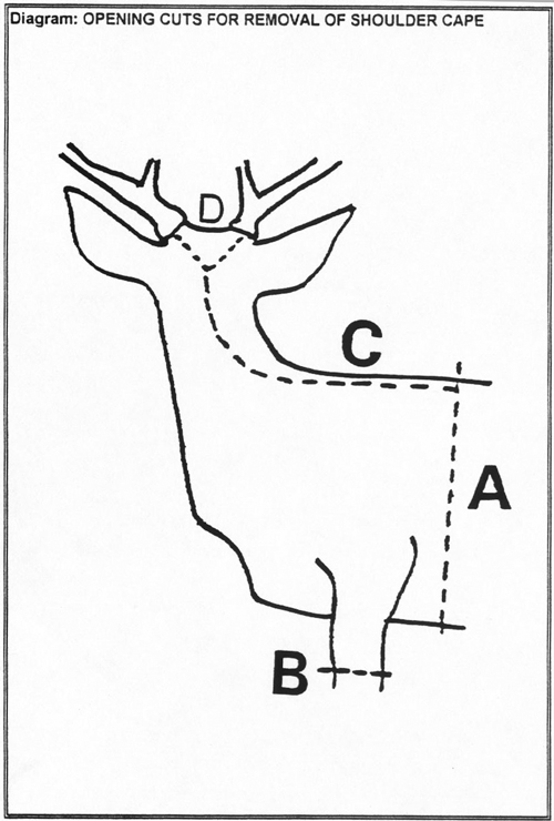 diagram of shoulder mount cuts