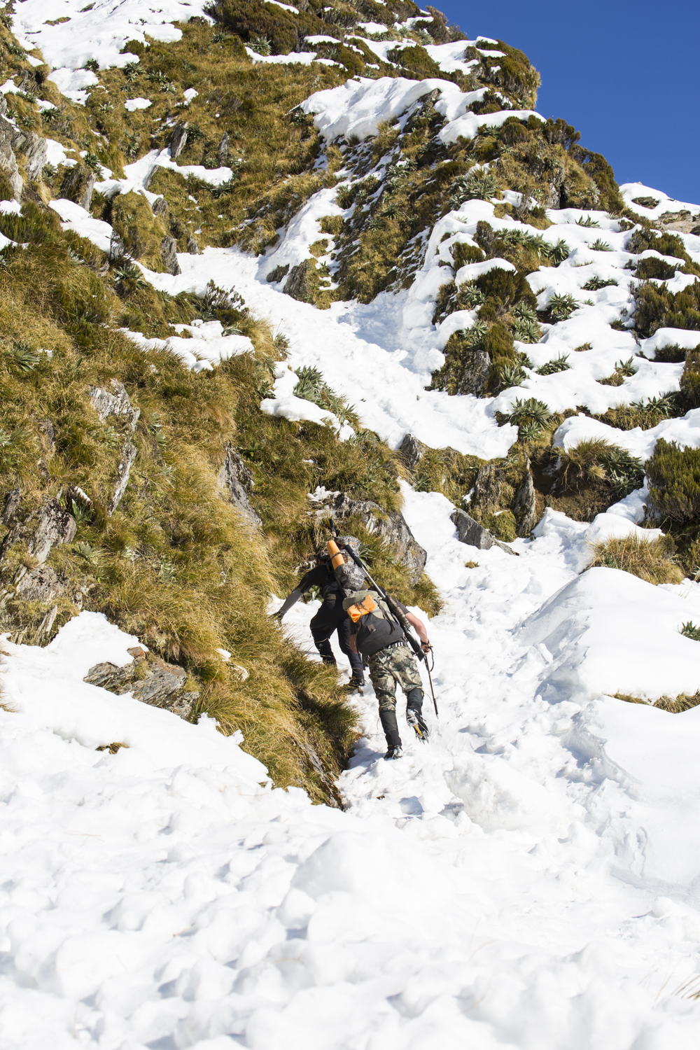 climbing steep broken snow and tussock while hunting tahr
