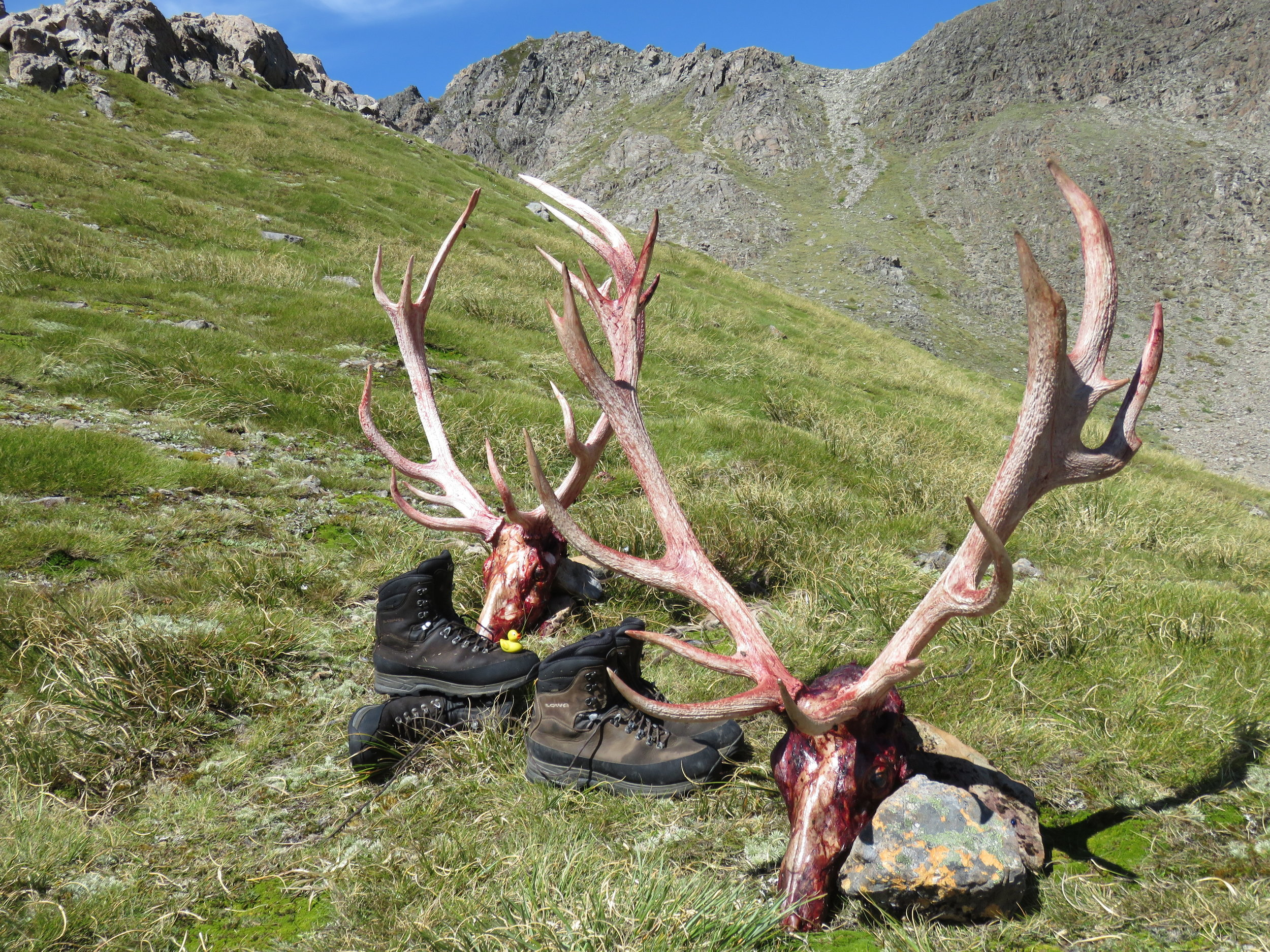 The main divide red stags on display with the Lowa boots