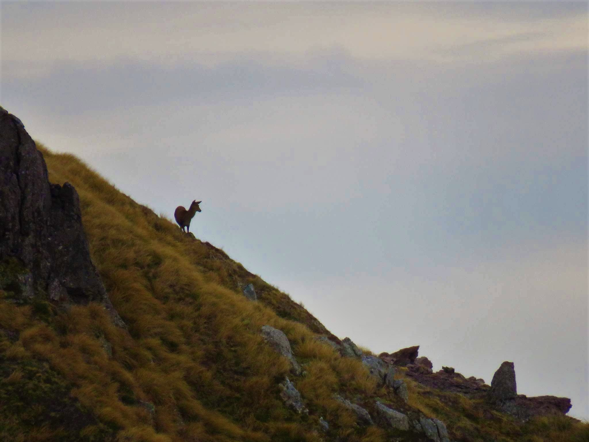 Hind on the skyline.jpg