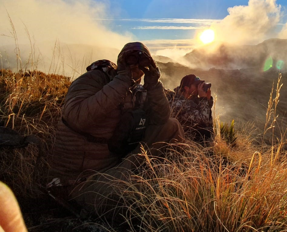 glassing for tahr in the fading westland light