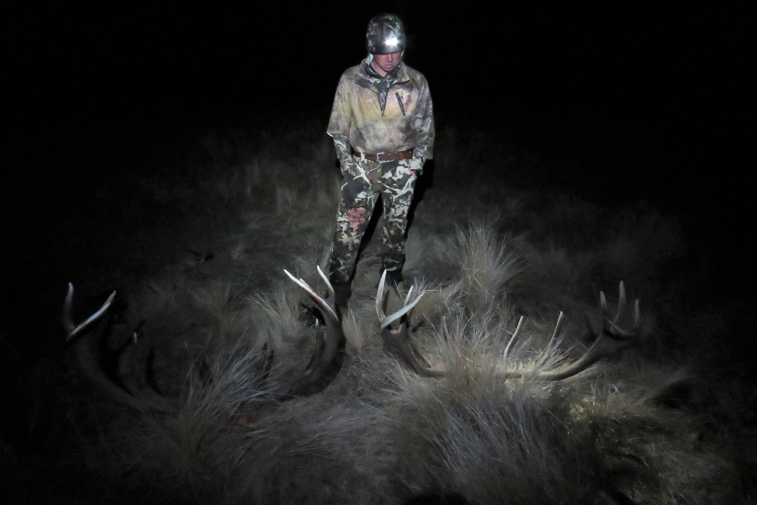 head torch on two wild red stags