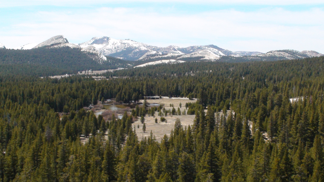 Tuolumne Meadows from Puppy Dome