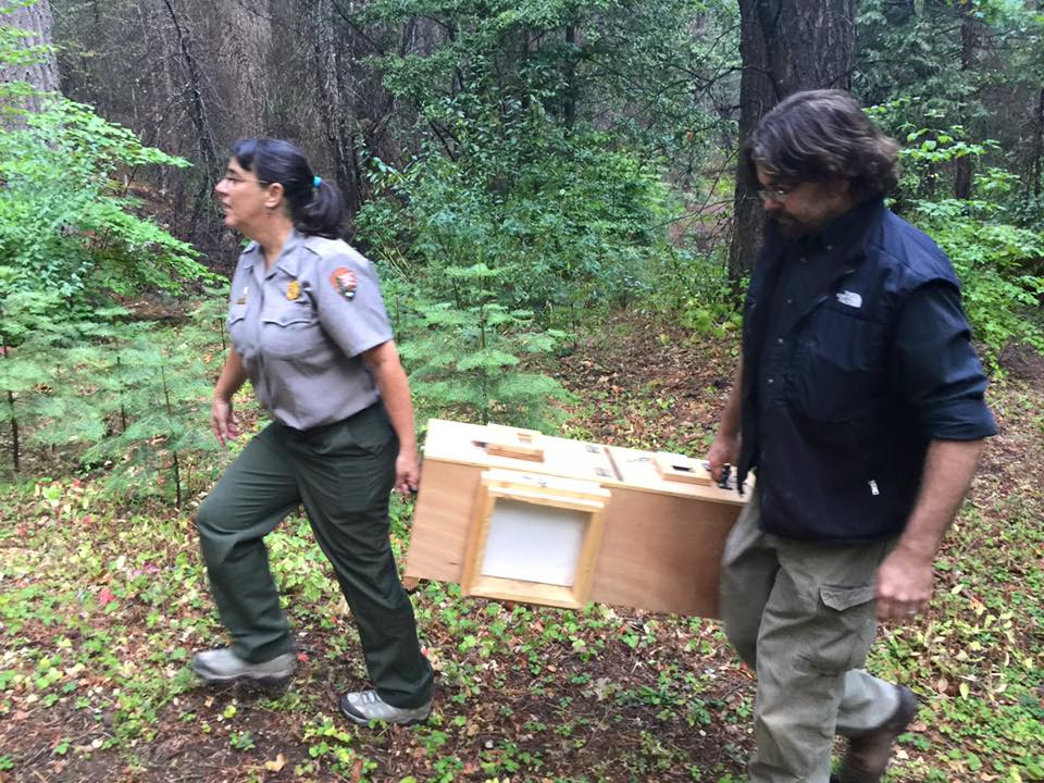 Rachel Mazur, National Park Service, and Craig Thompson, US Forest Service, carry one of the fisher pairs to the release site. Photo by Beth Pratt