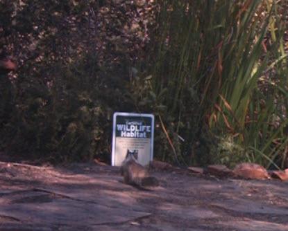 """hey, it's a certified wildlife habitat! I'm staying."""