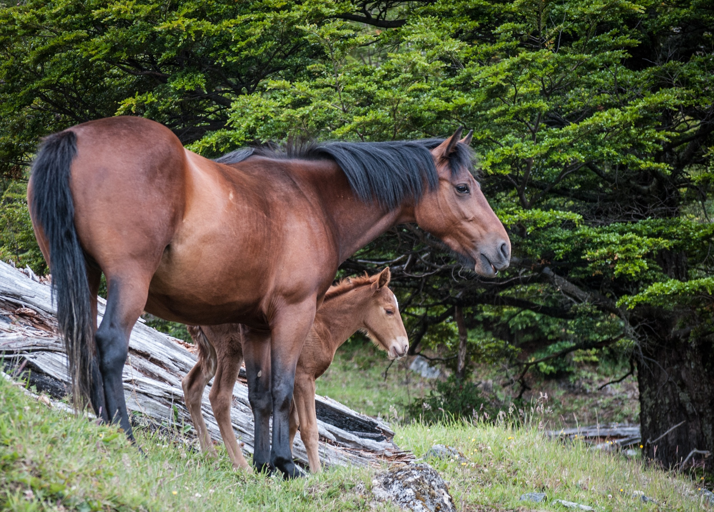 bahati colt full body profile.jpg