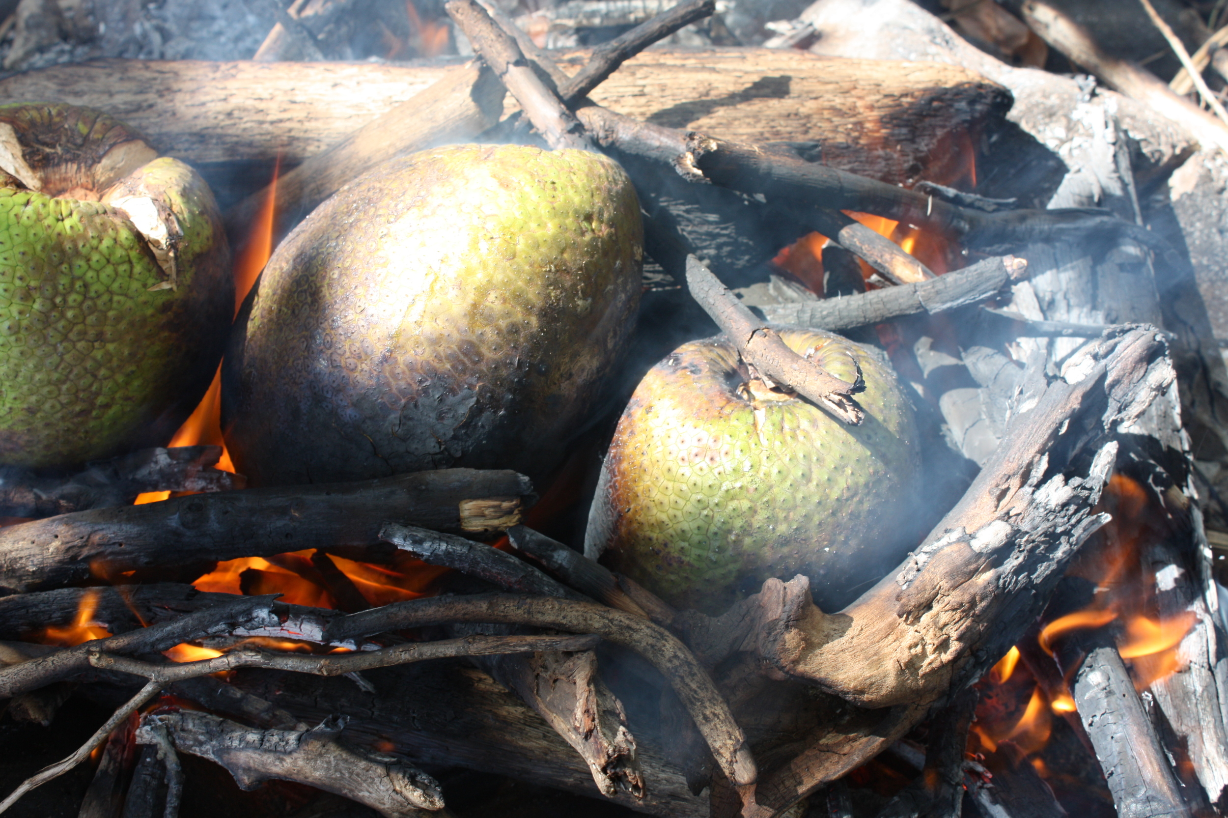 12.breadfruit.jpg