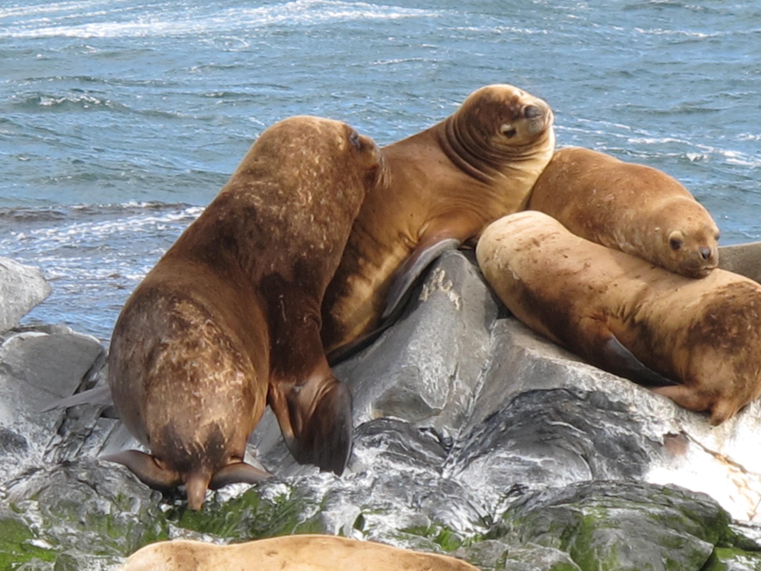 beagle - seals.jpg