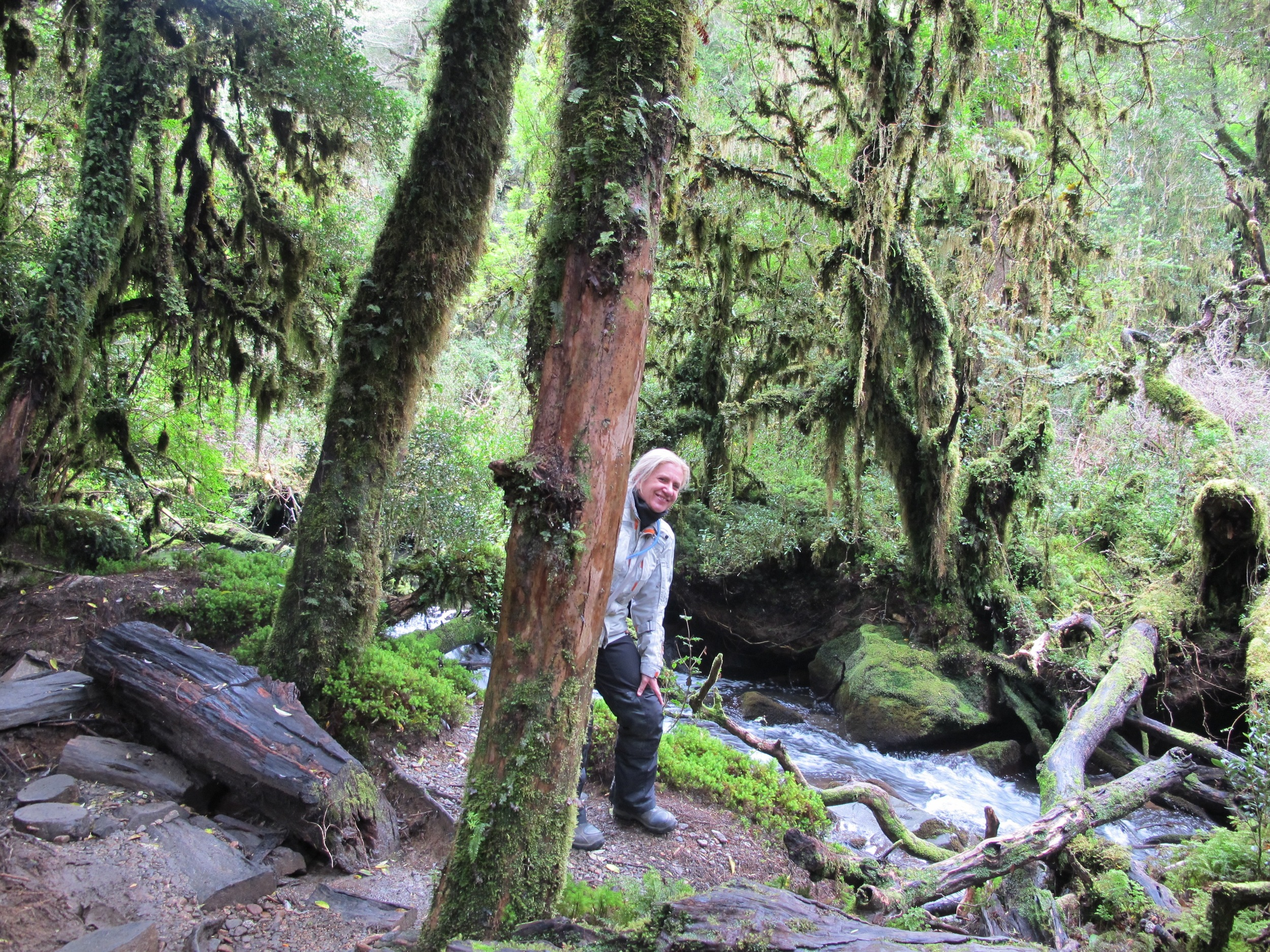 Enchanted forest walk, Carretera Austral, Chile