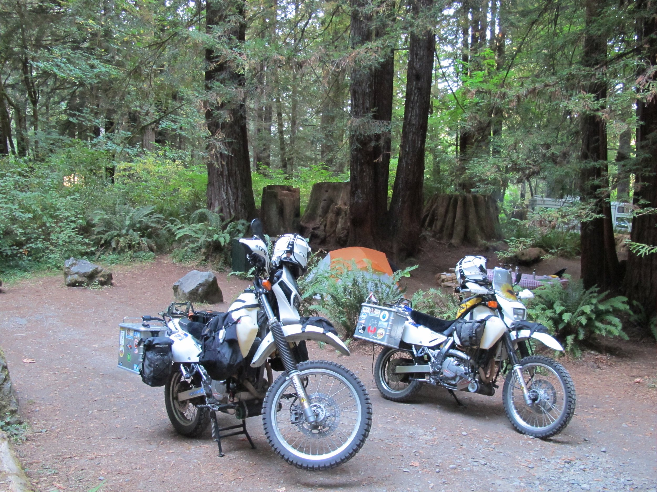 Camping amongst the Redwoods.
