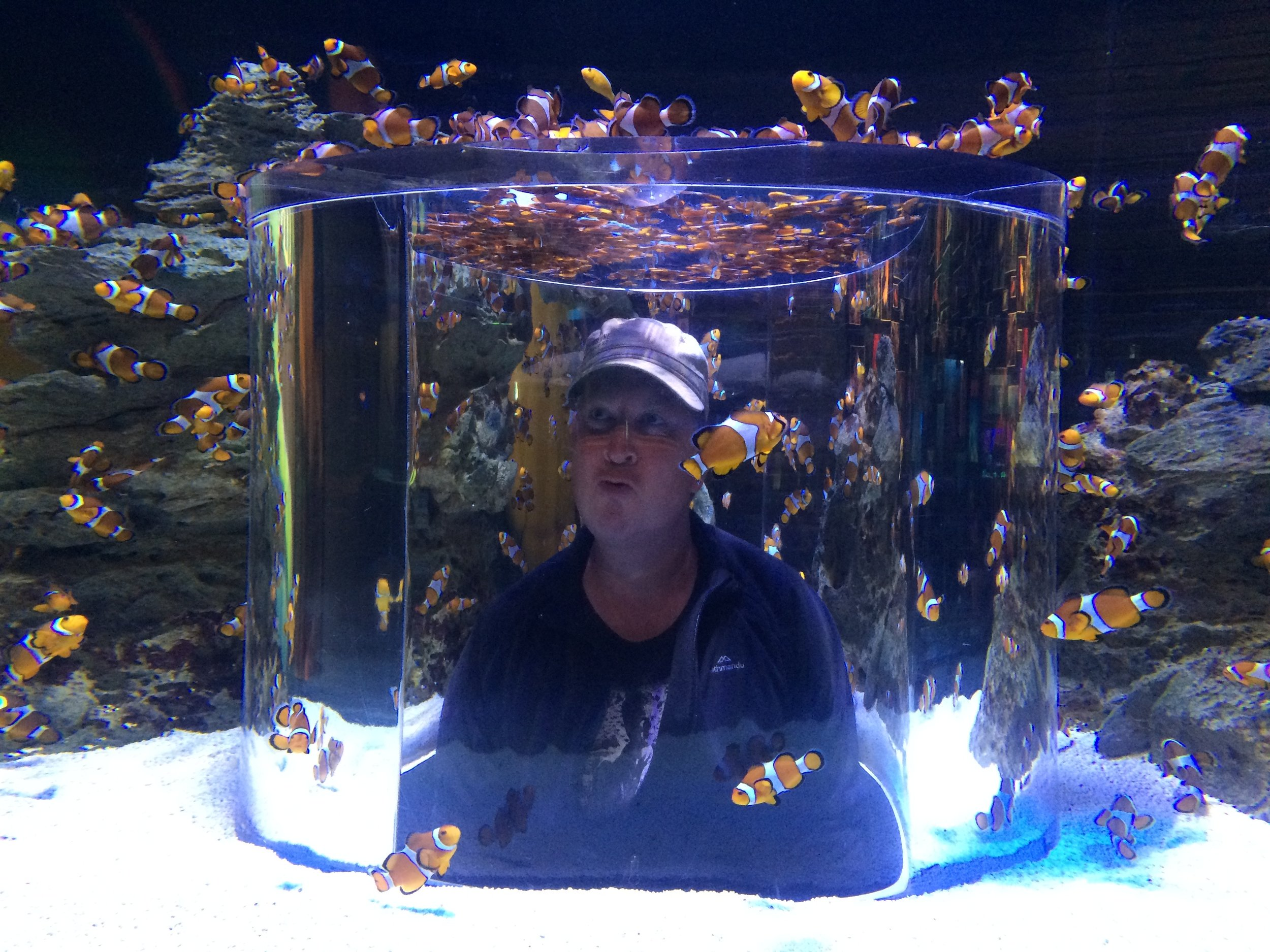 Found Nemo, it's that one!