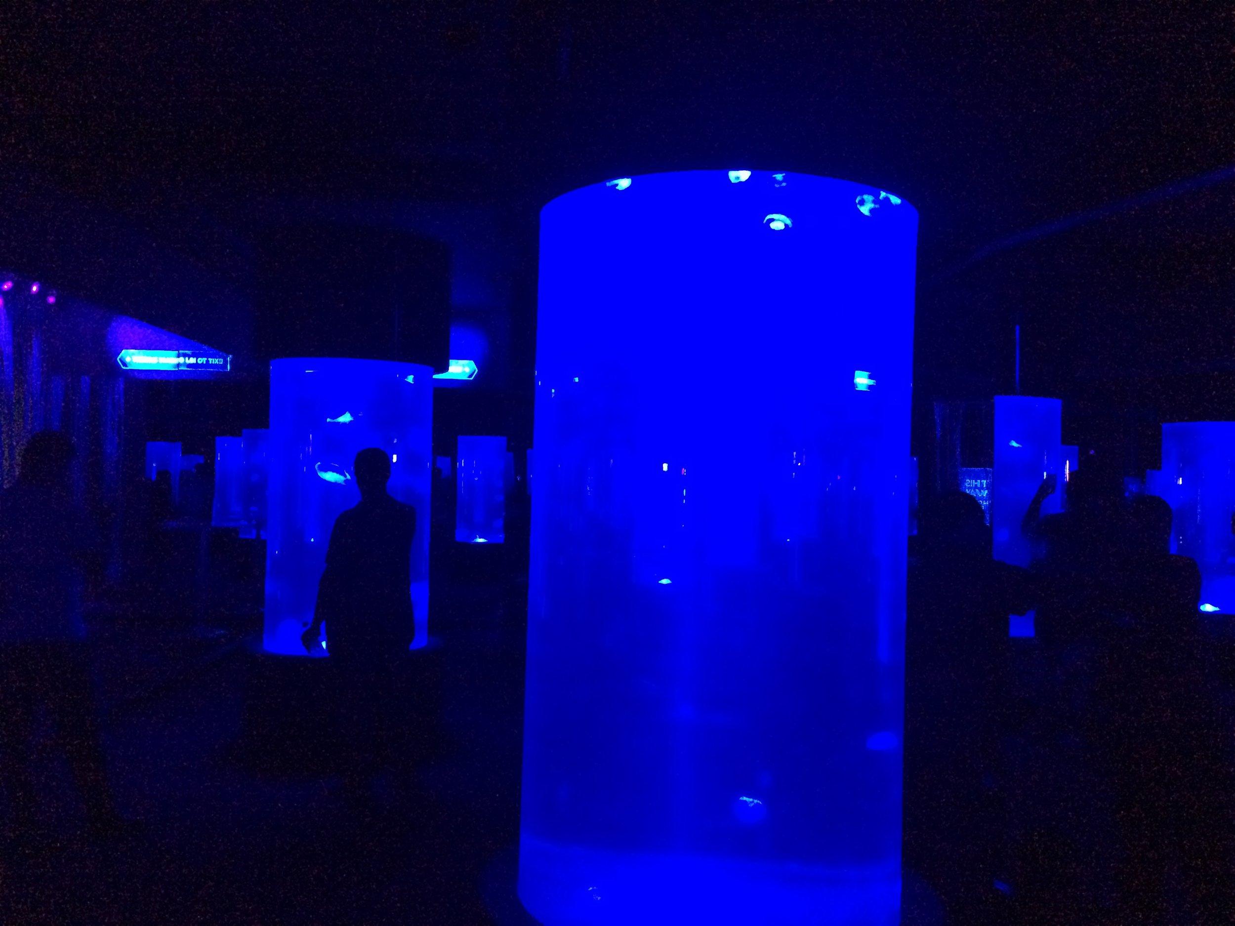 At the Cape Town Aquarium, pretty cool jellyfish room.