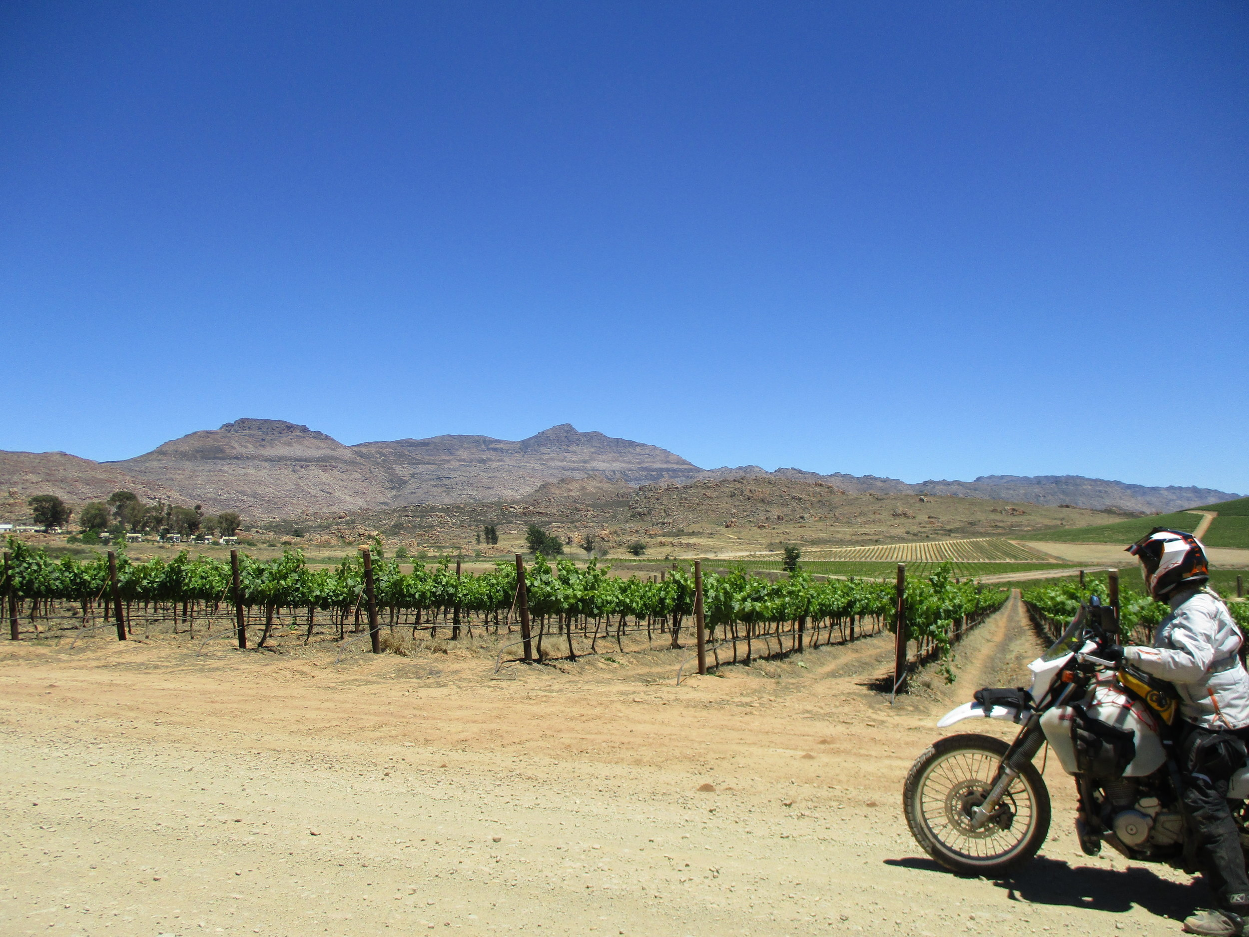 ...and came out at a lovely vineyard.