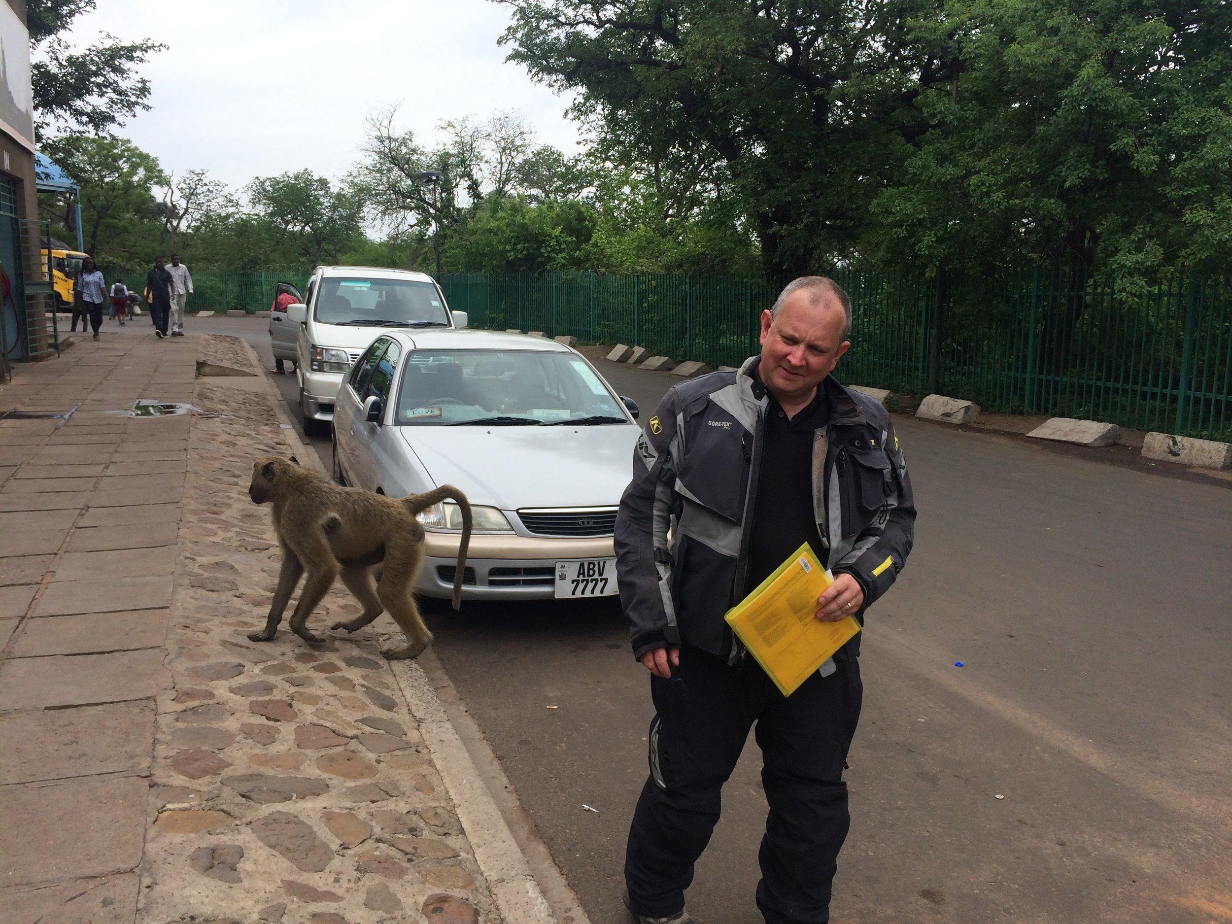 Baboons at the Zambian border post