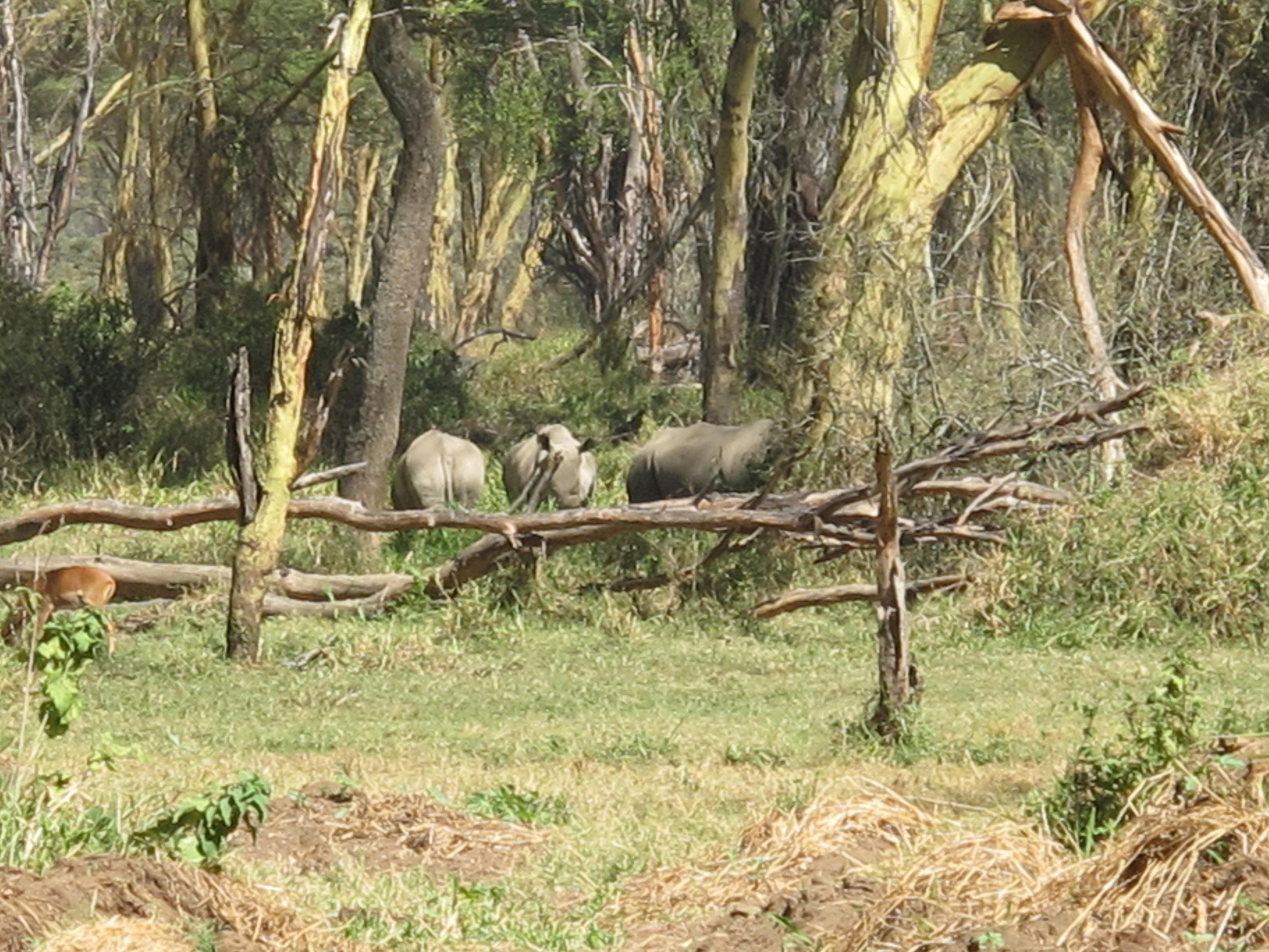 Rhino....tick