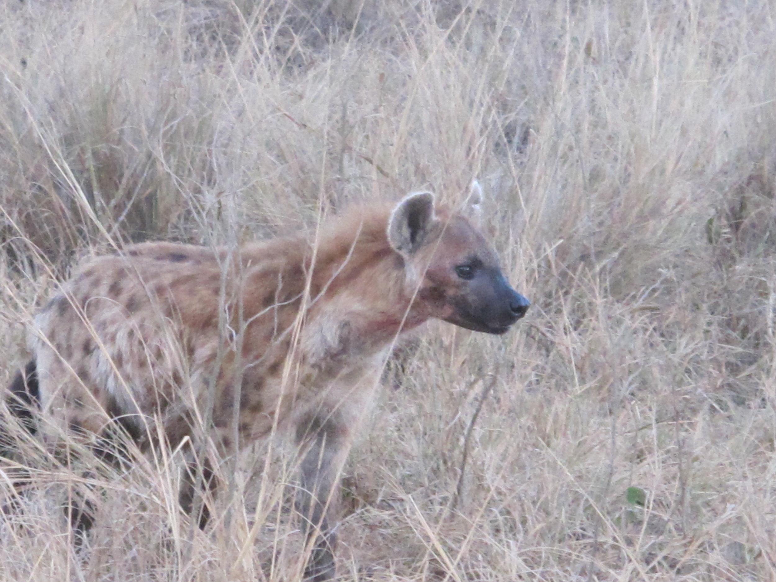 Hyena....ha ha ha ha ha ha ha