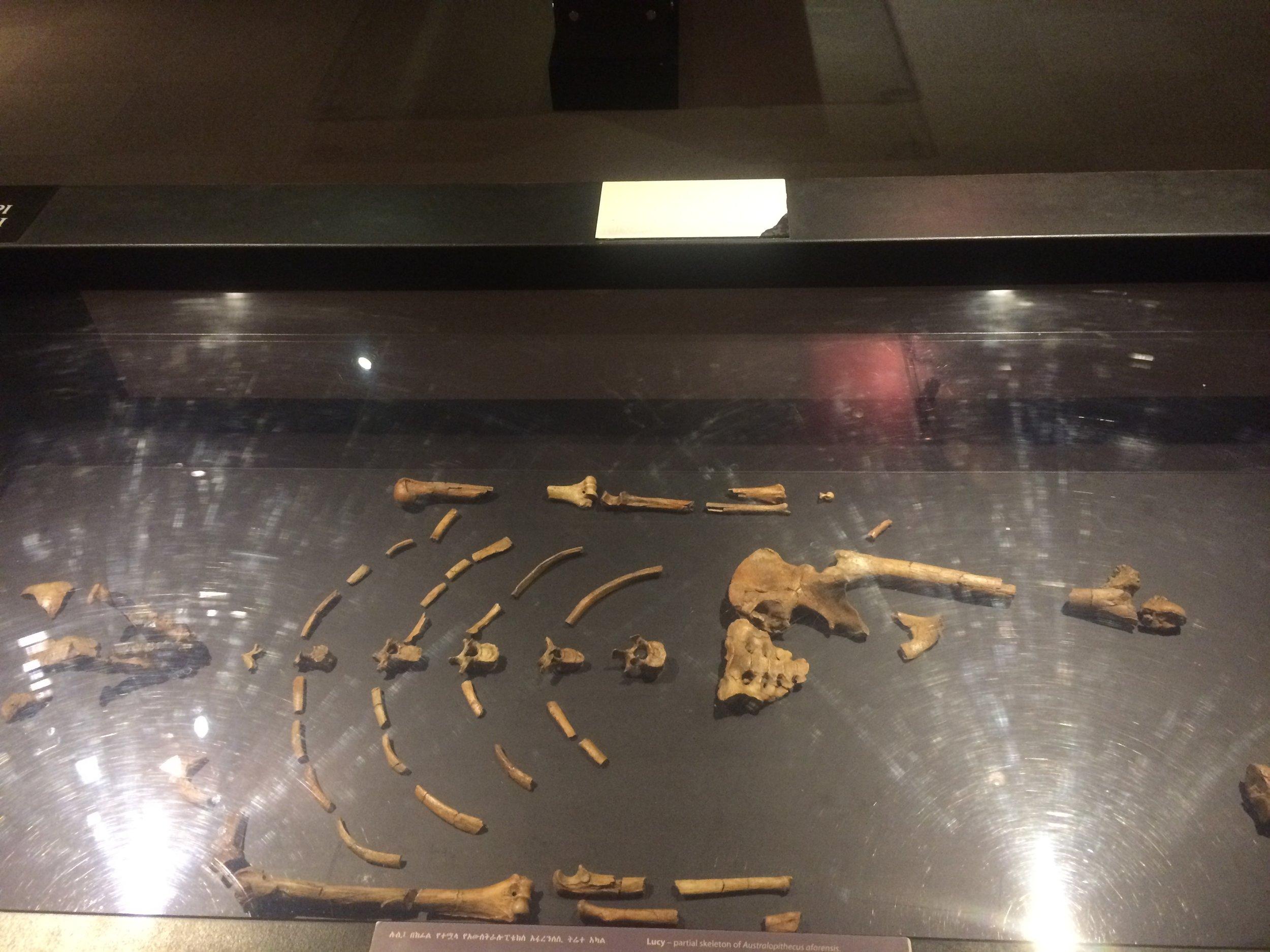 Lucy's bones.