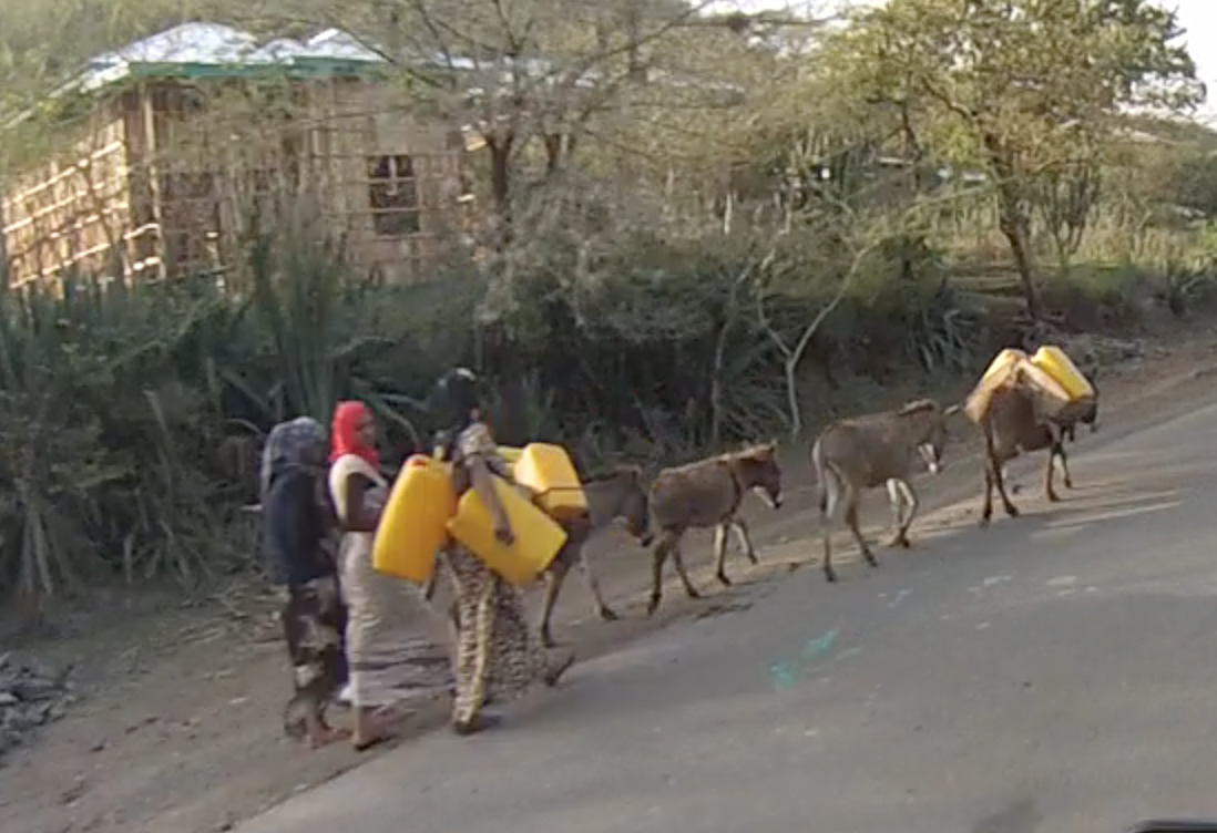 Women and donkeys off to fetch water