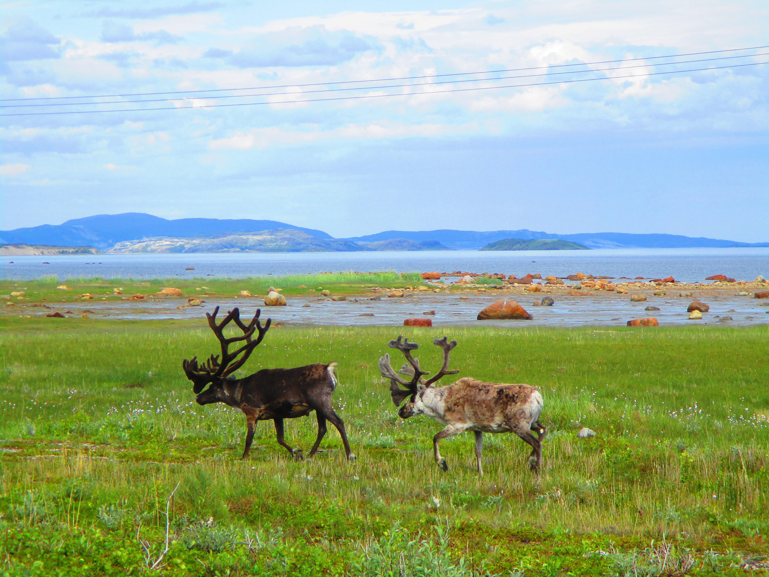 These are special reindeers - they're Santa's - taking a holiday before the Christmas season.