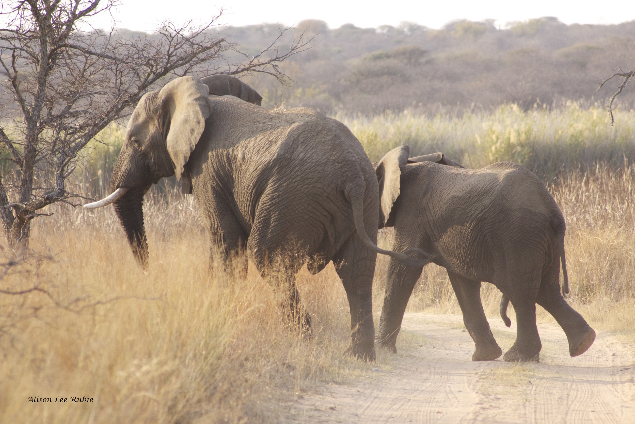 Mighty elephants