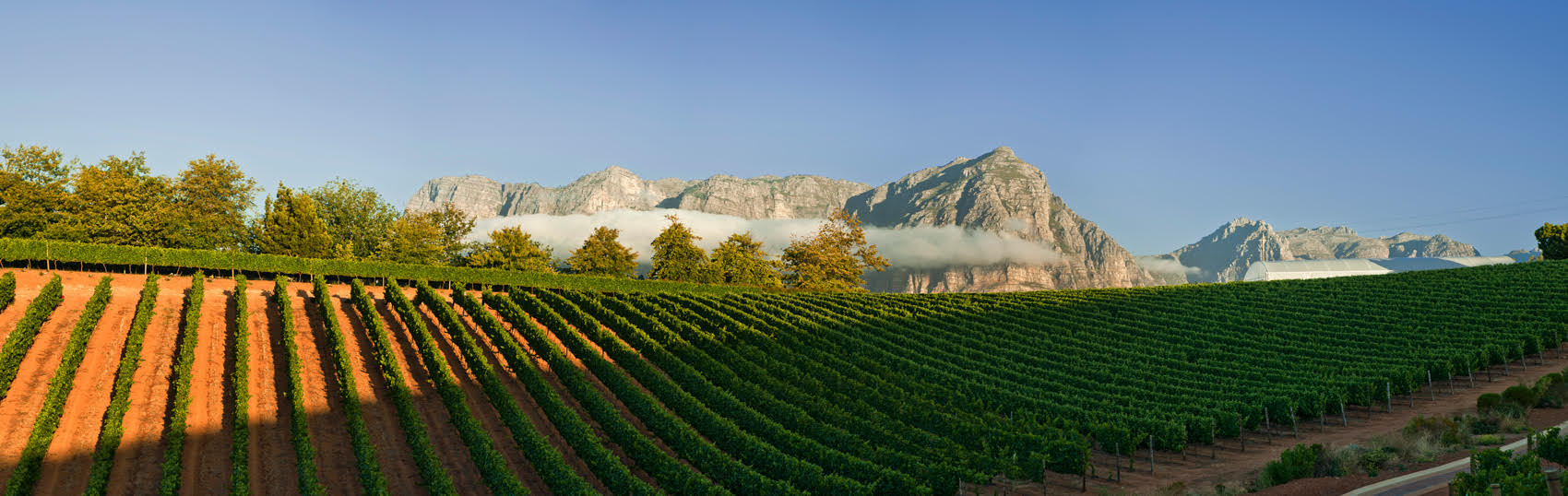 Spectacular view of the vineyards at Stellenbosch