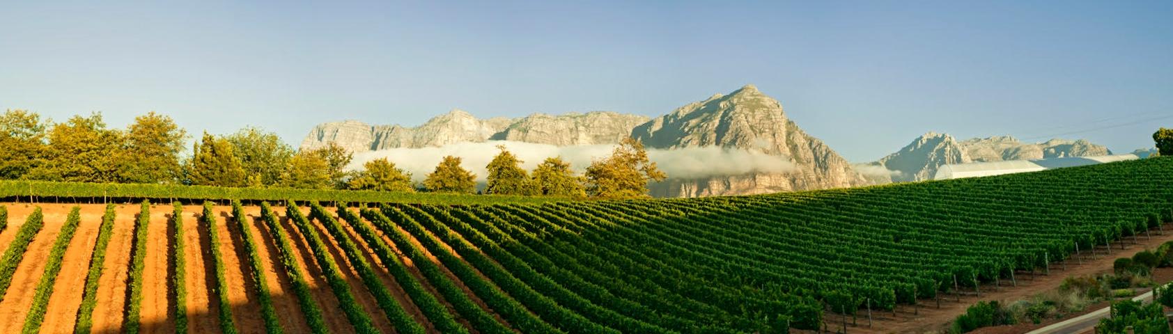 Spectacular views of the vineyards at Stellenbosch