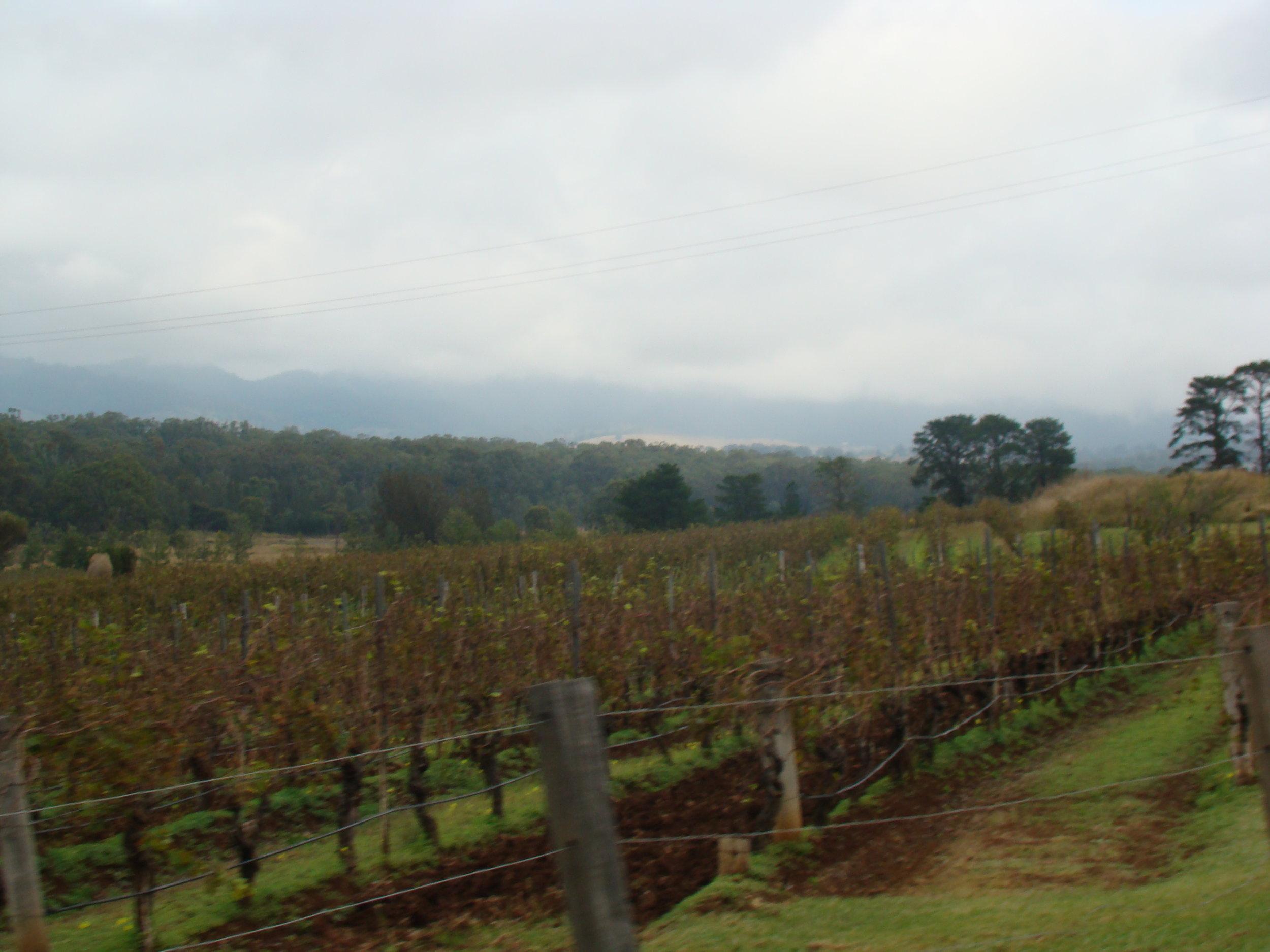 Wine lovers' paradise