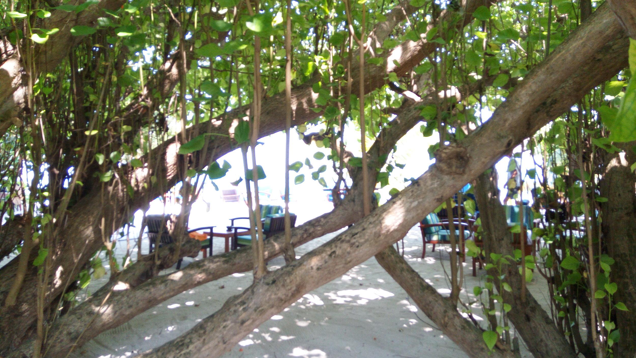 Bar Cum seating area on the beach