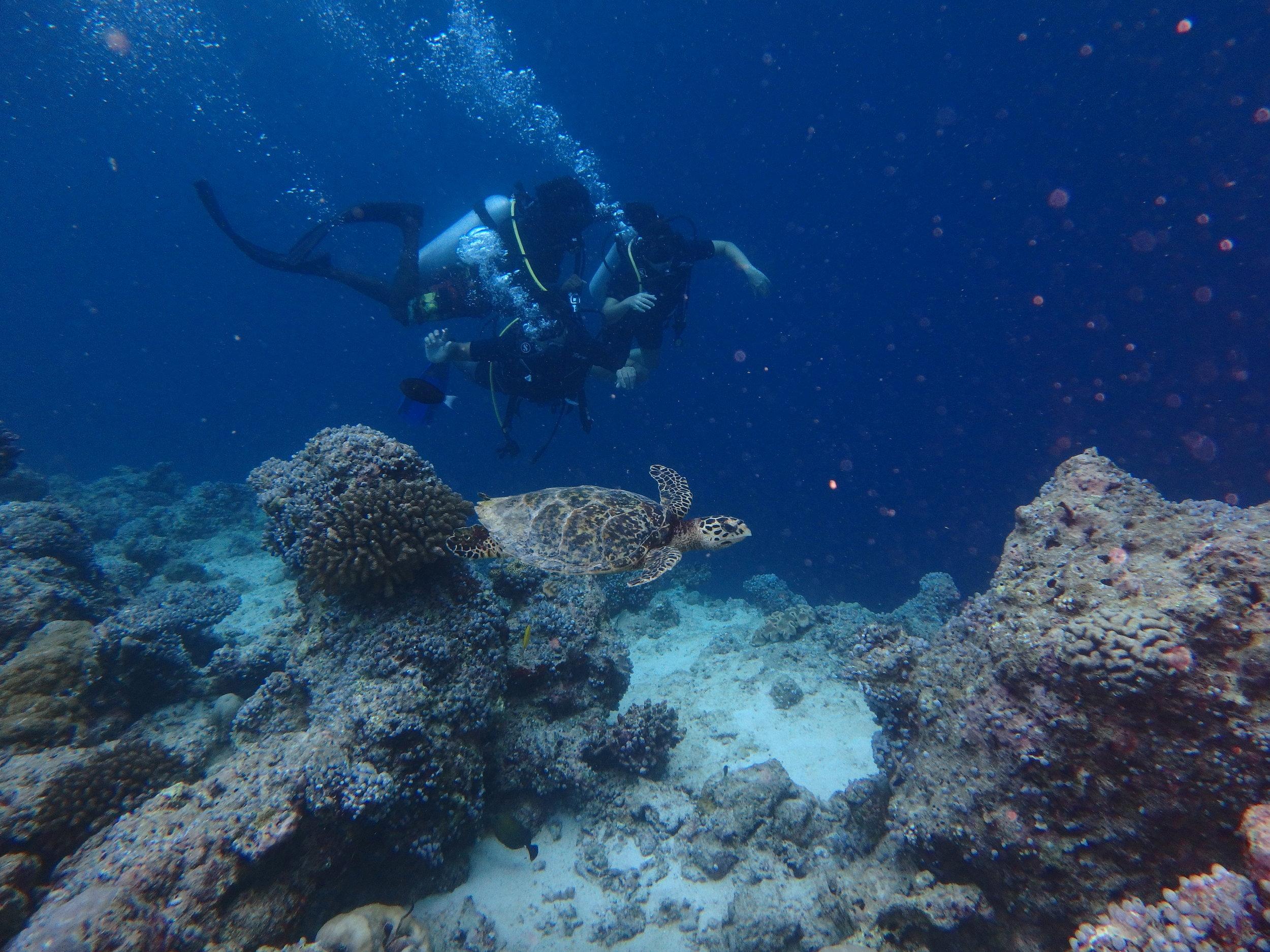 Sea turtle in Maldives Scuba dive