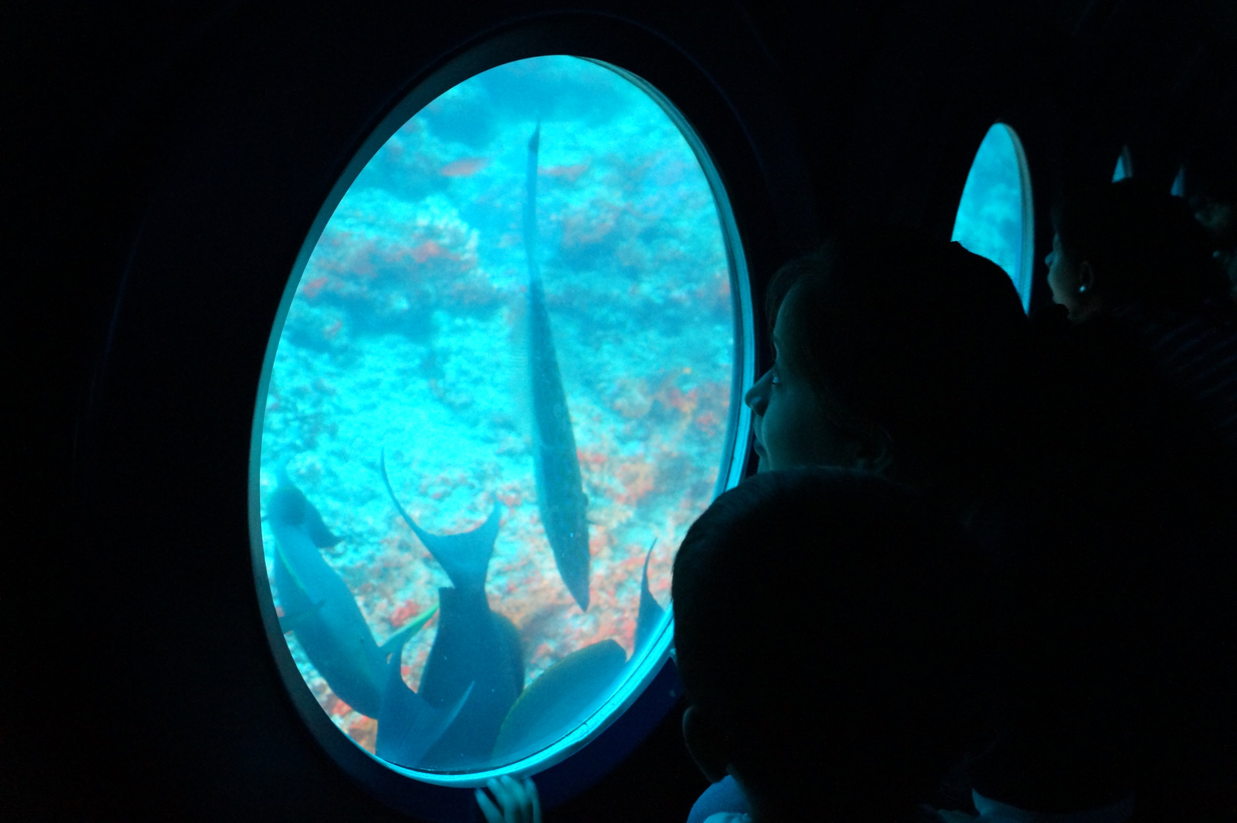 Submarine dive in Maldives