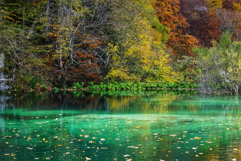 Crystal cear emerald waters of Plitvice lakes gorgeously surrounded by the autumn colours  (6).jpeg