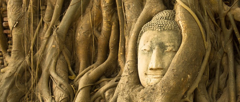 The Buddha Tree