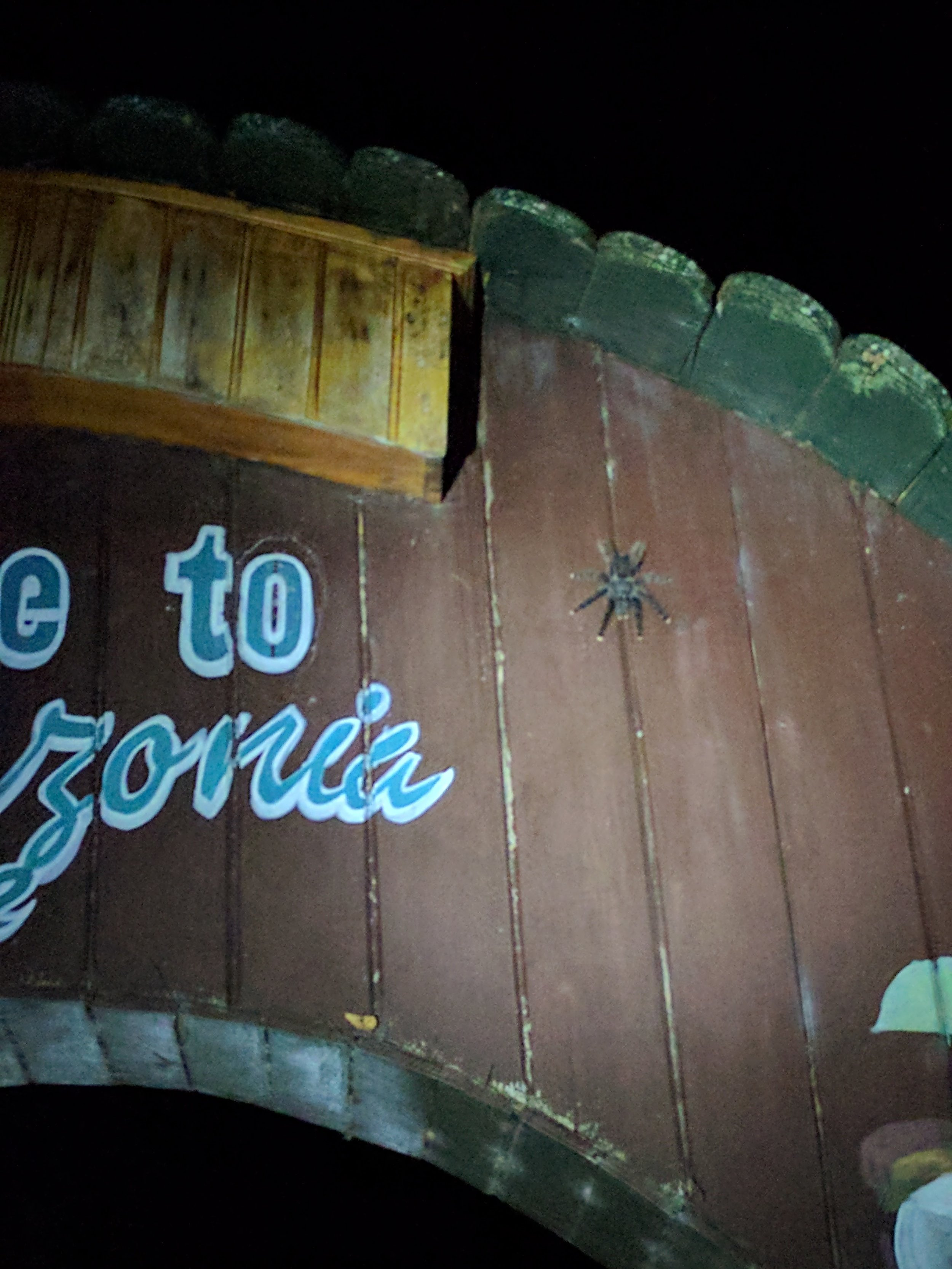 Every night we would walk out to the welcome sign and see the tarantula that lived there!