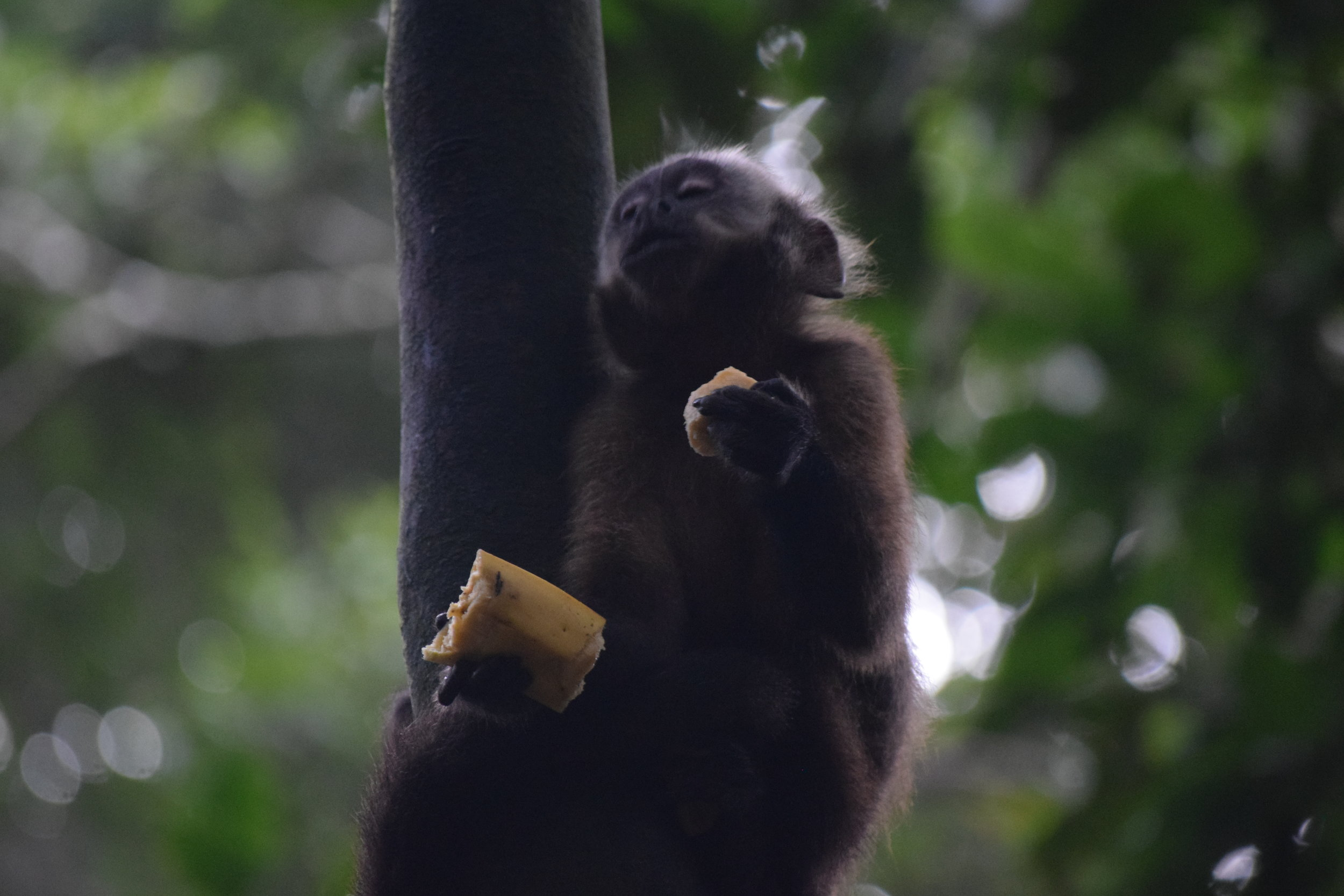 Jeff snapped this photo of pure ecstasy on a capuchin monkey's face while eating a banana. This picture is one of my favorite from our entire trip. It's going to make an excellent meme...