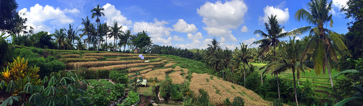 bali-rice-field-ubud-yoga-peaceful
