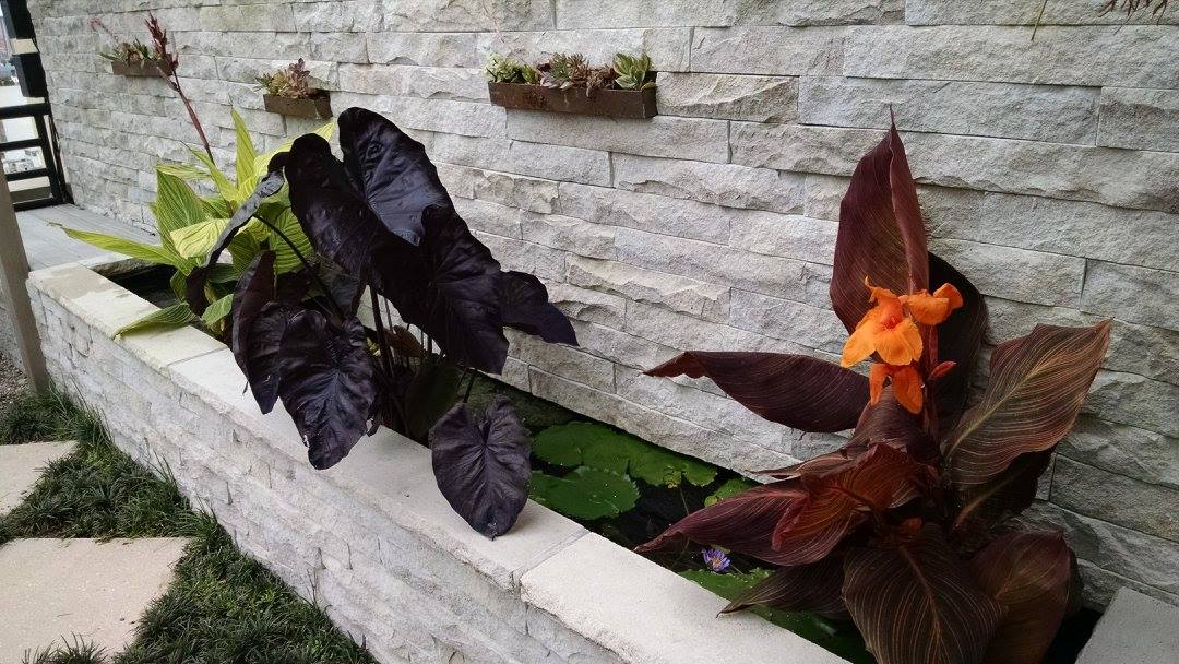 Planter_wall_2.jpg