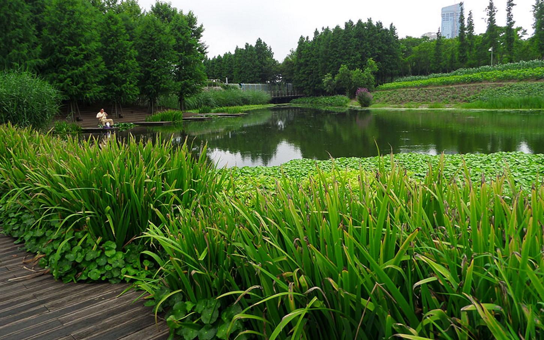 NATURAL LAKE & POND RESTORATION