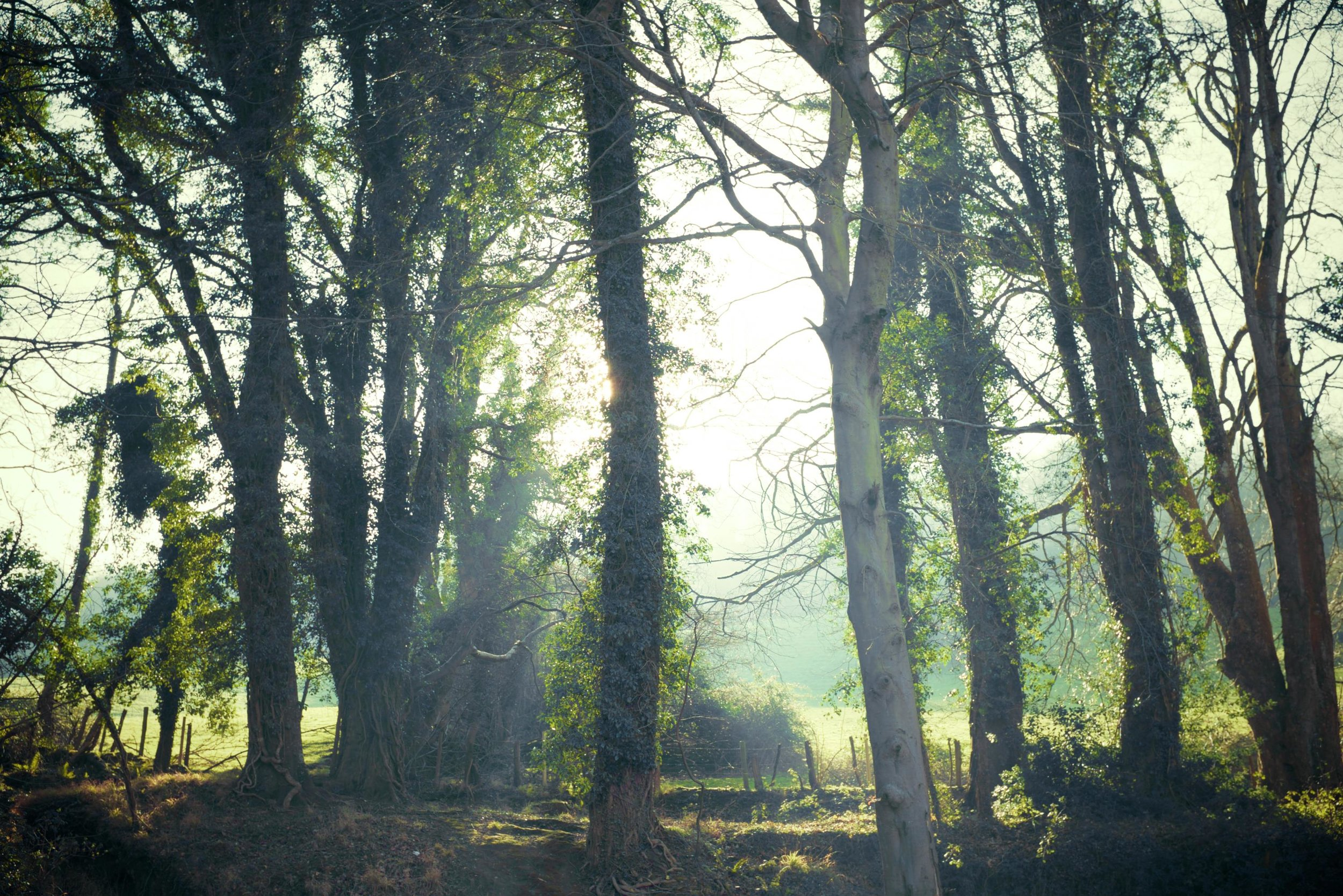 picography-enchanted-forest.jpg