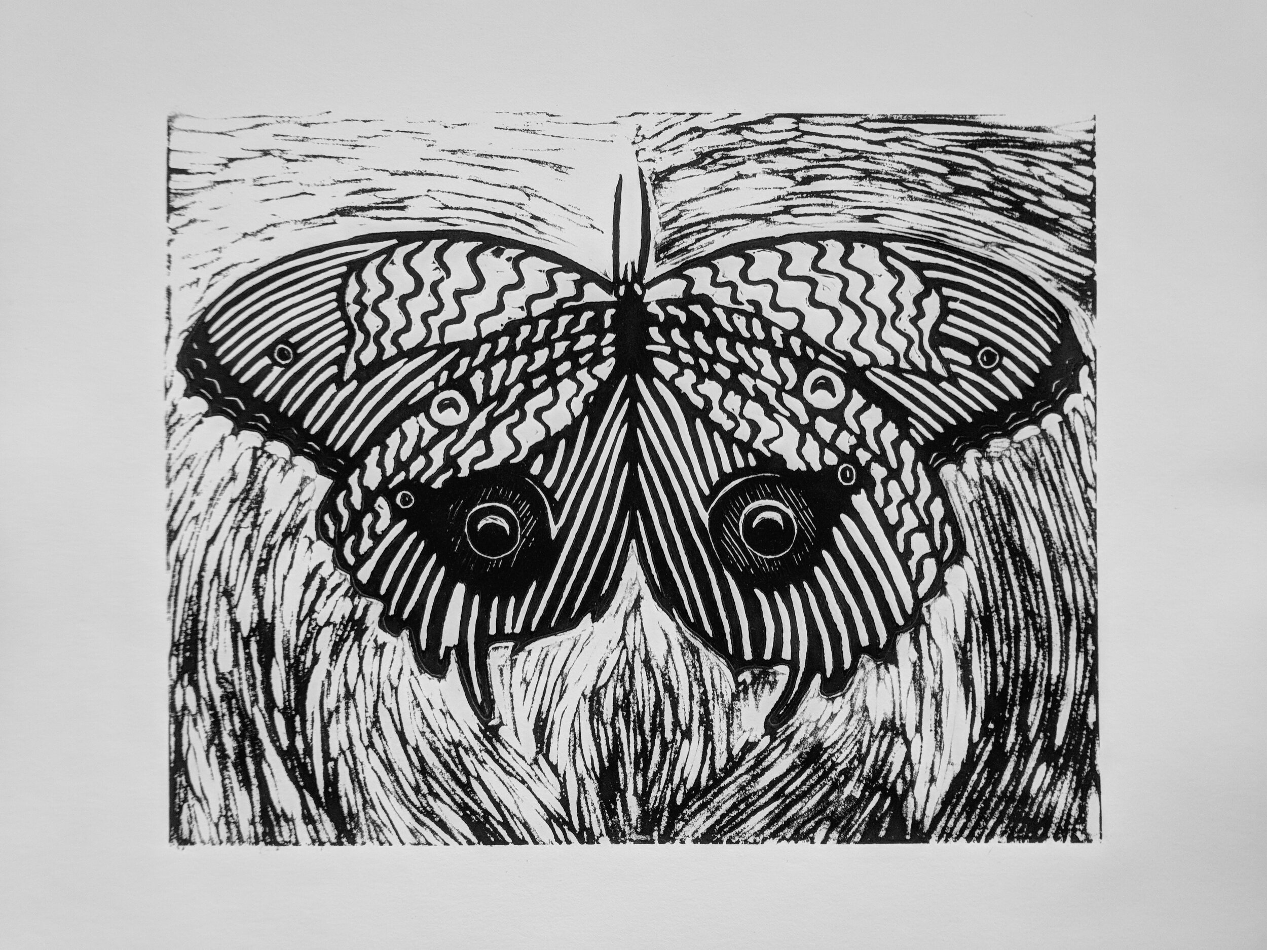 Owl_Eye_Moth (1).jpg