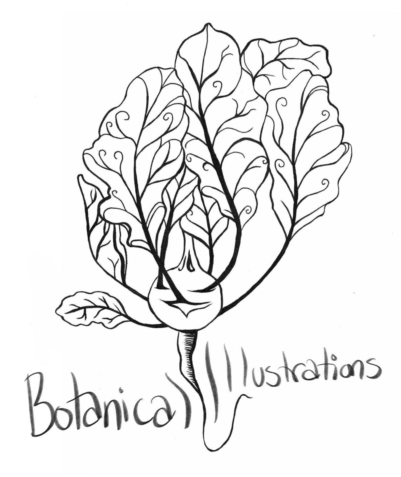 Botanical_Illustrations.jpg