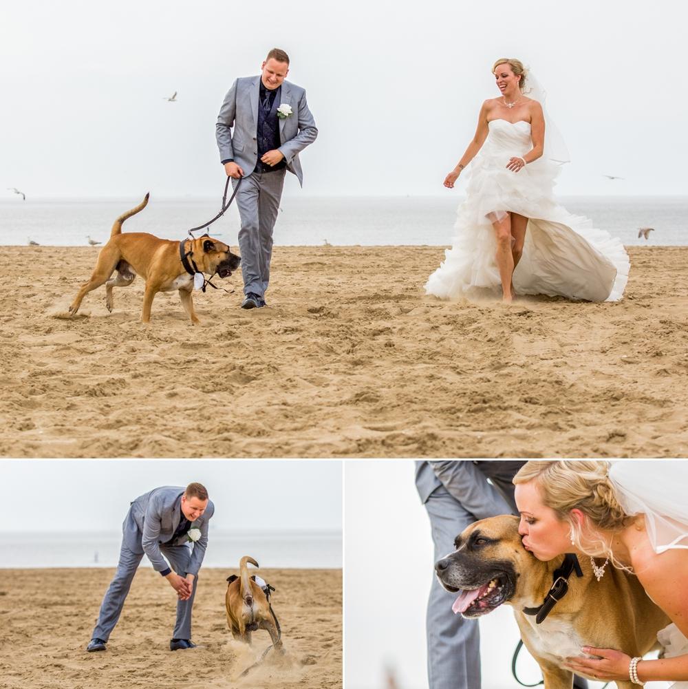 trouwen op het strand met hond
