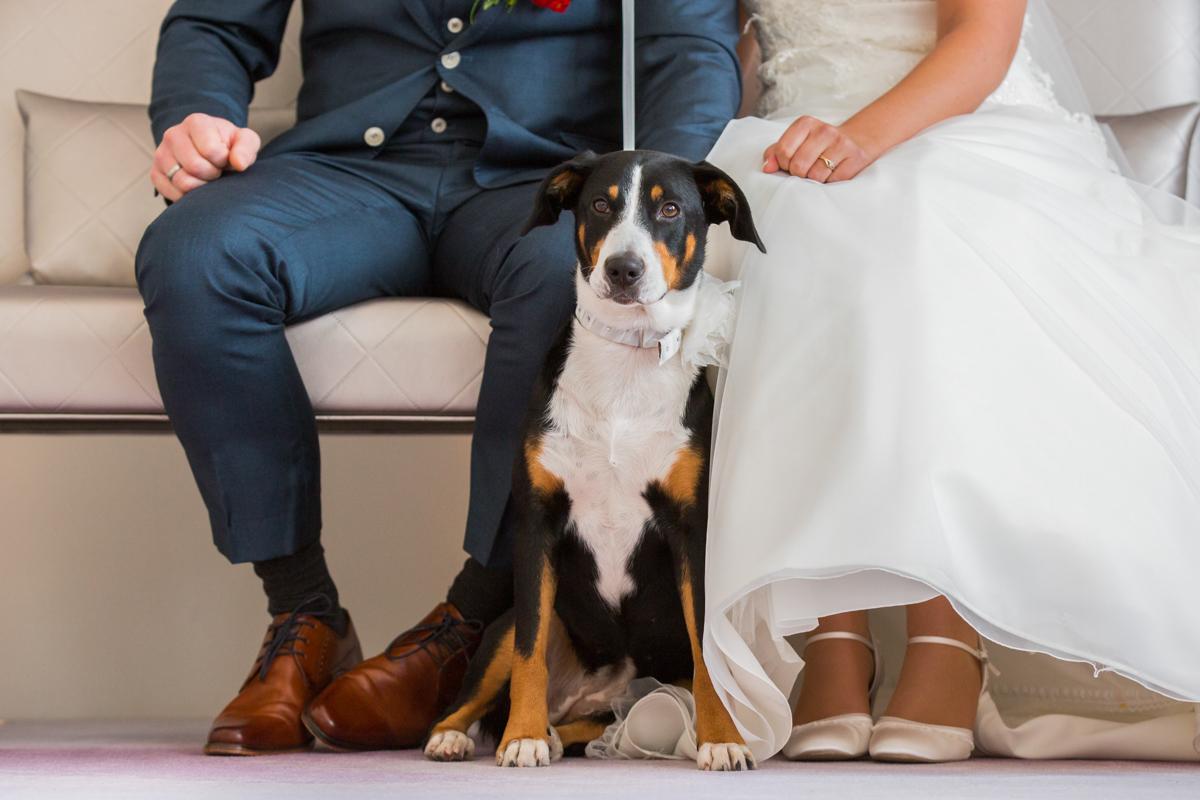 hond op je bruiloft dierendag