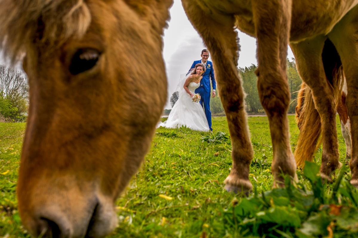 paard op je bruiloft paarden