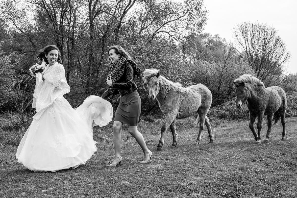 bruid tussen de wilde paarden