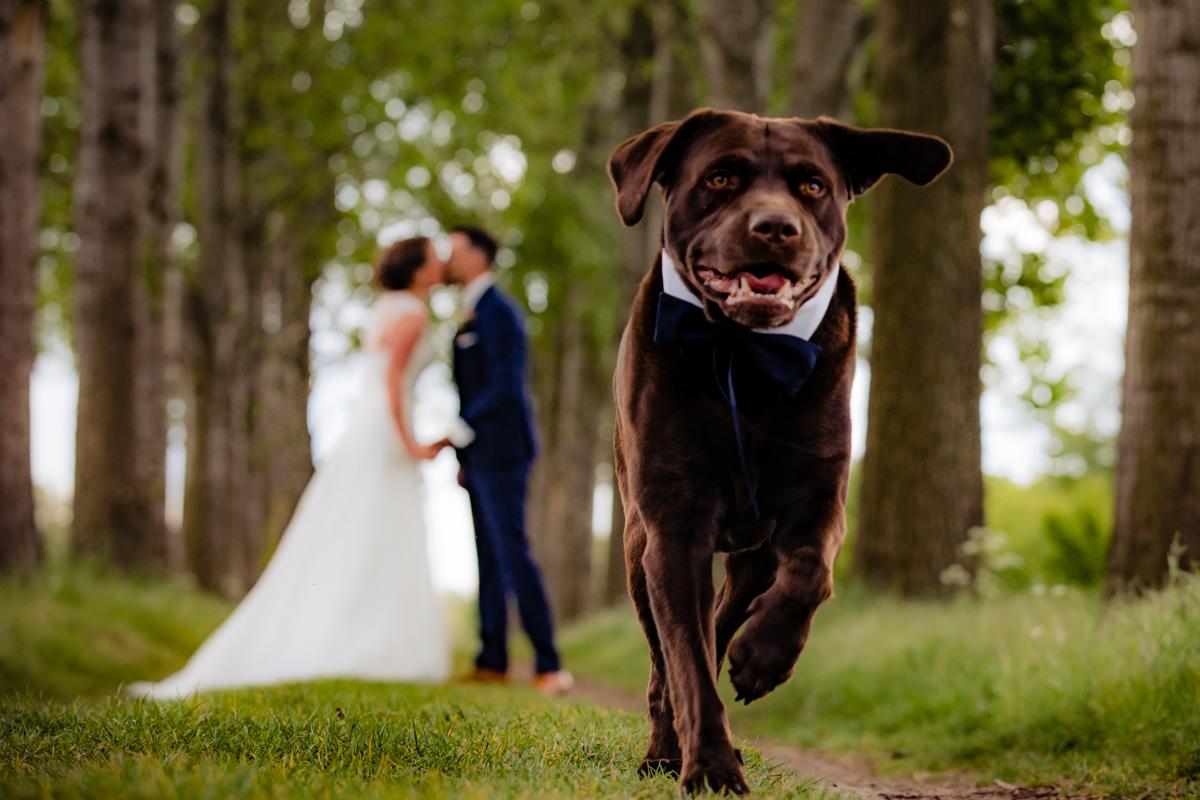bruiloft hond bruidspaar