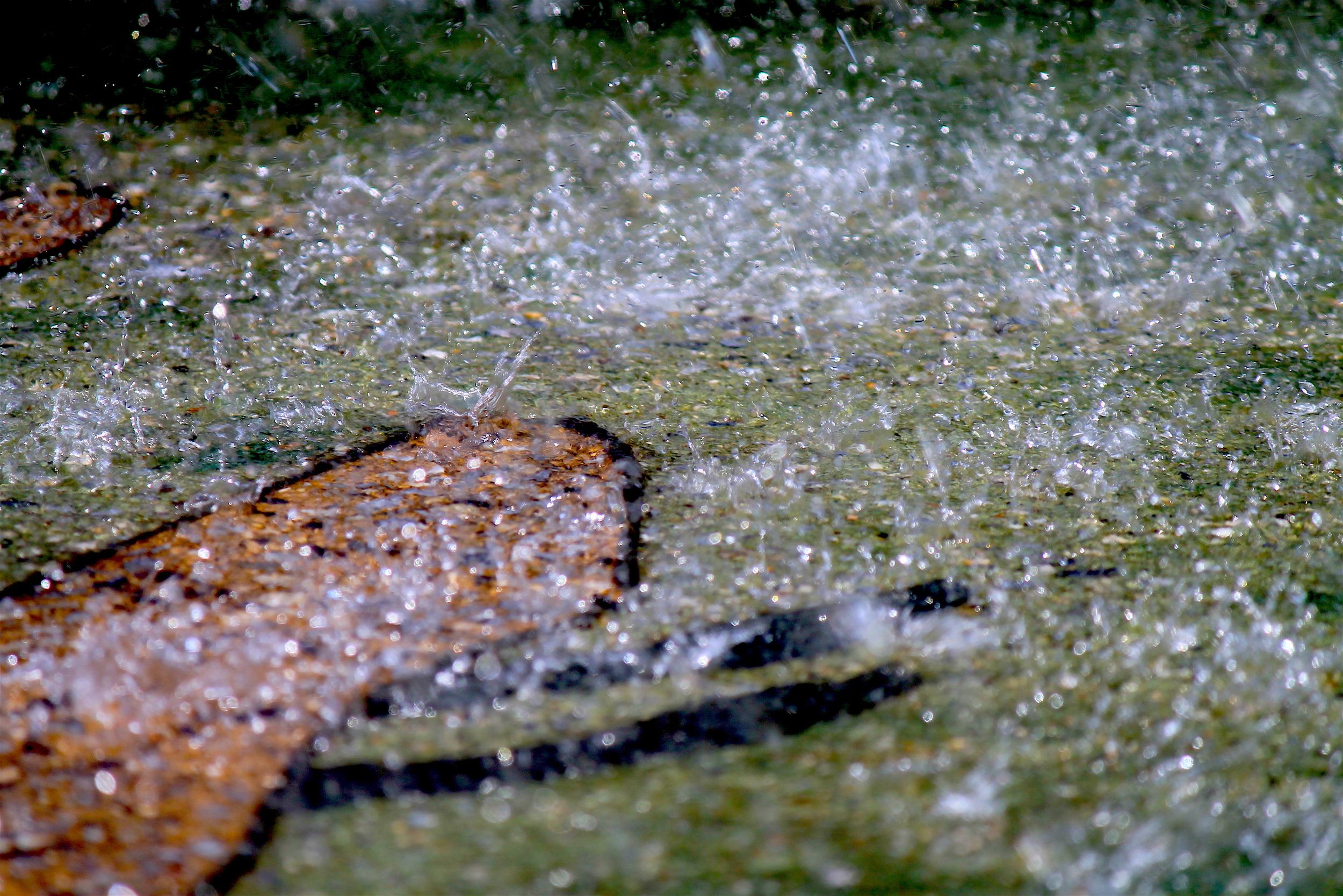 Sprinklers Week 6 #10.JPG