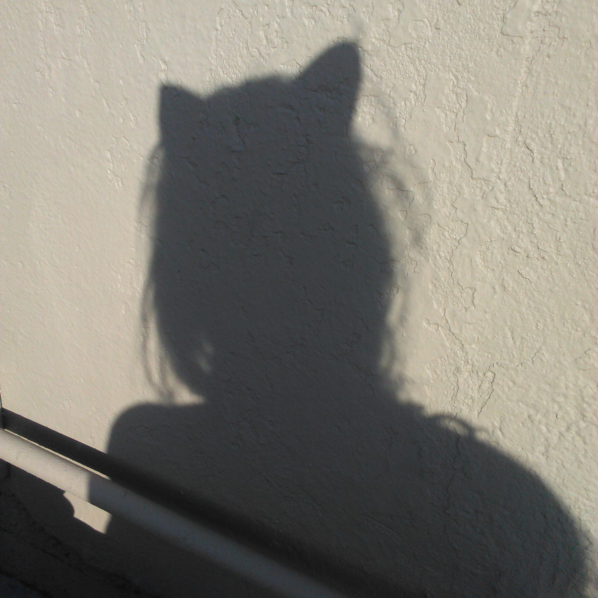 Melissa Cat Shadow.jpg