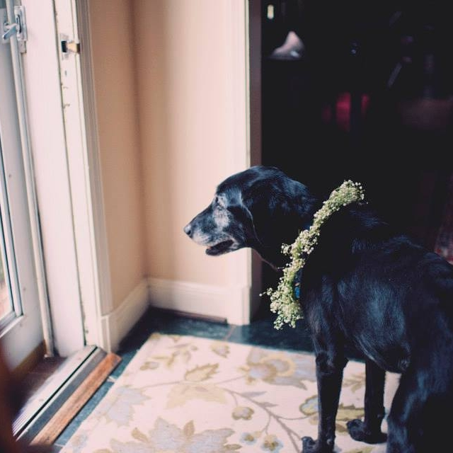 Boutique-DC-Wedding-Planner-Backyard-Ceremony-Welcome-Dog-MD-A-Griffin-Events.jpg