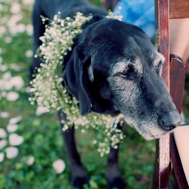 DC-Boutique-Wedding-Planner-Backyard-Potomac-Wedding-dog.jpg